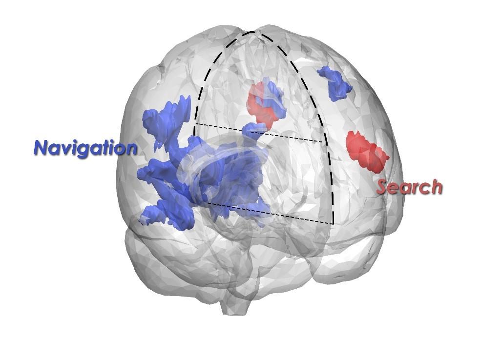 brain-bergman